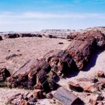 Petrified Forest NP Long Logs Trail