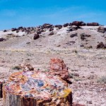 Petrified Forest NP trail