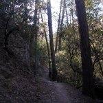 Chiricahua NM Echo Park trail