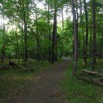 Manassas NBP woods