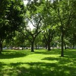 National Mall trees