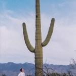 Saguaro NP tall saguaro
