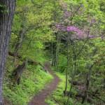 Shenandoah NP Doyles River Trail