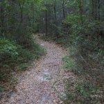 Gulf Islands NS Fort Barrancus Woodland Trail