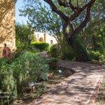 Tumacacori garden
