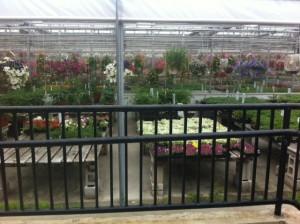 volante farms needham