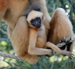 Franklin Park Zoo, Stone Zoo, Mother's Day endangered animal event
