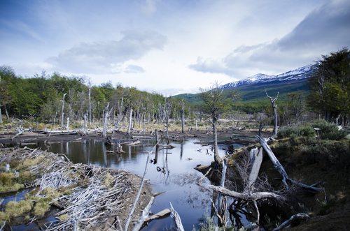 rio-gallegos-argentina