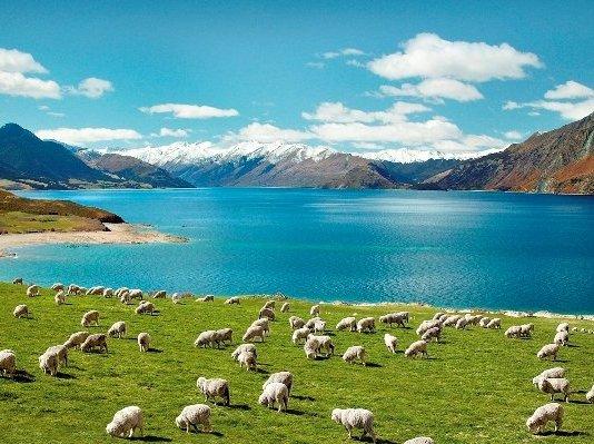 New Zealand field