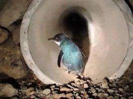 Penguin Underpass nz