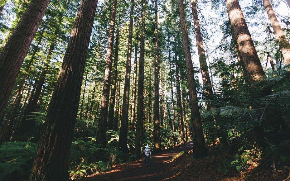 akhil suhas forest GANDALF