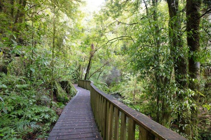 Waitomo Vacation NZ
