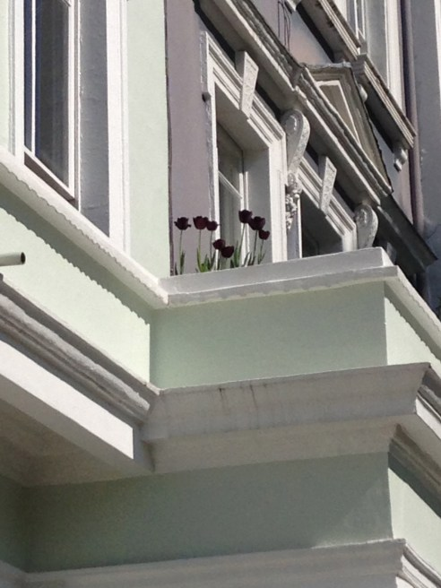 Tulips on Chalcot Square