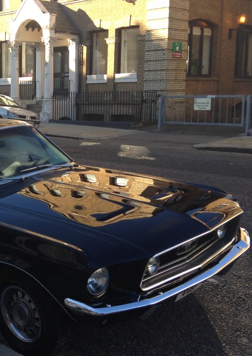 REFLECTIONS ON A MUSTANG. © 2013 iLovePrimroseHill.com, all rights reserved.