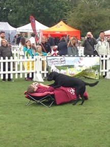 HEARING DOG SHOWING HOW HE WOULD WAKE HIS OWNER UP IN THE MORNING - WHO WOULDN'T WANT TO BE WOKEN UP LIKE THIS?!