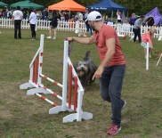 DOG AGILITY. THIS WONDERFUL BUNDLE OF FLUFFY FUN WENT *AROUND* THE HURDLE WITH GREAT JOY