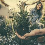 How to Create a Healthy Garden