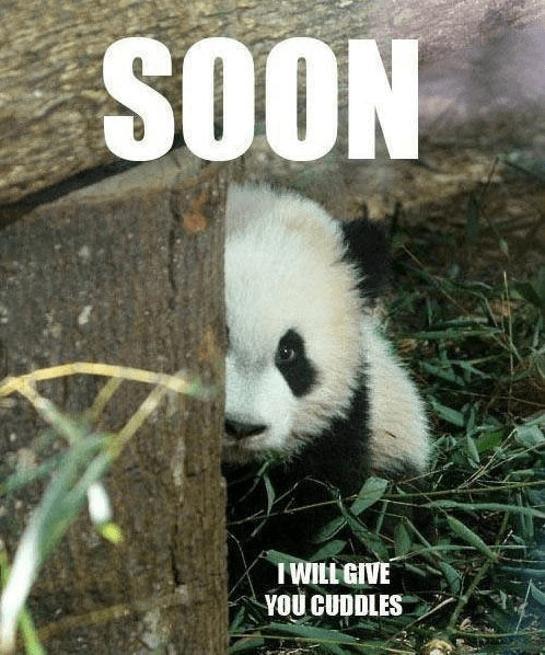 soon i will give you cuddles panda meme?resize=498%2C598&ssl=1 hilarious cuddle memes and images for couple cuddle memes