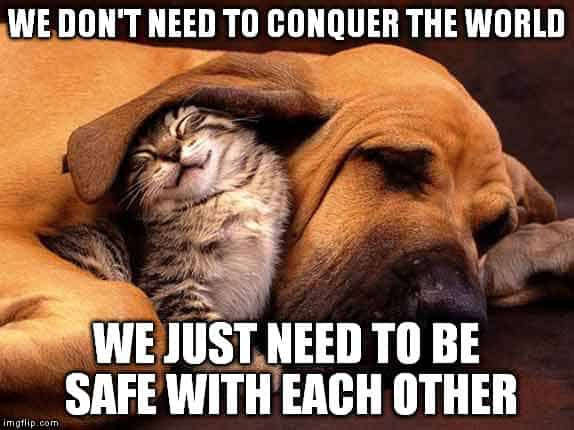 We Don't Ned To Conquer The World Funny Dog And Cat Cuddle Meme