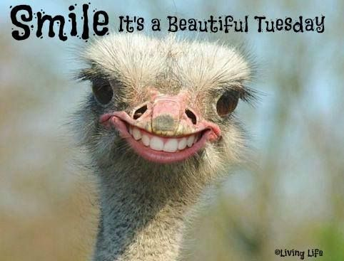 Happy Tuesday Memes, Images and Tuesday Motivational Quotes