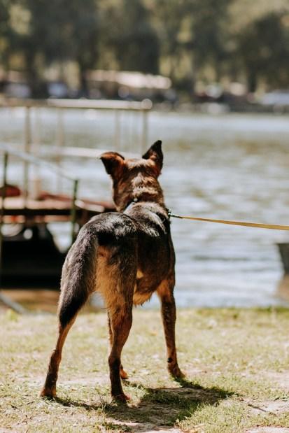 tisza tó kutyával 4