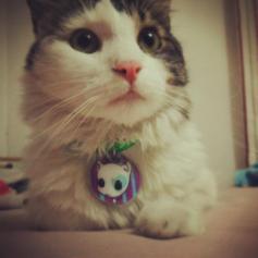 Collares para Gato i Love Tokio Couture