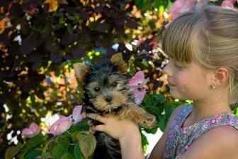 child girl blond dog yorkshire terrier