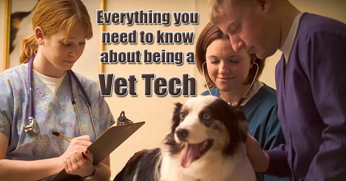 Everything You Need To Know About Being A Vet Tech I Love Veterinary