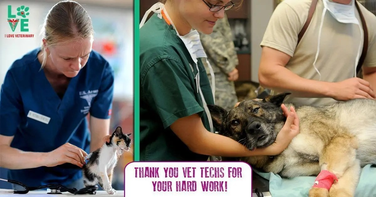 what is a veterinary technician