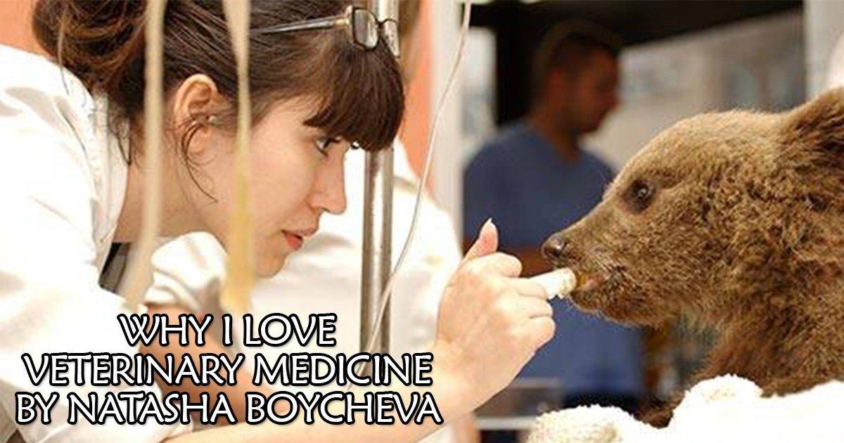 vet i love veterinary