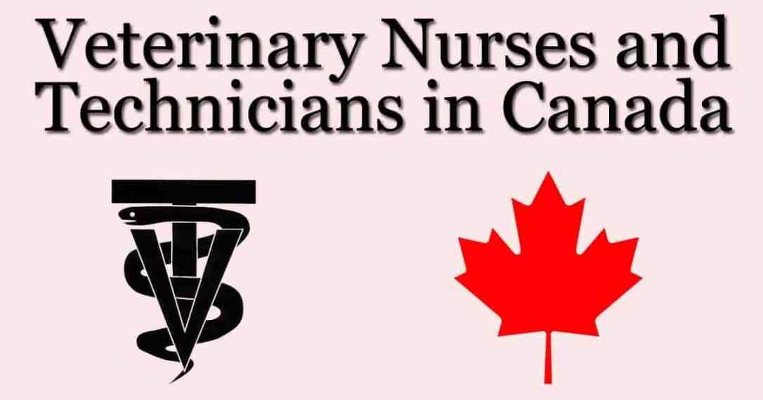 maple canada vet tech vet nurse