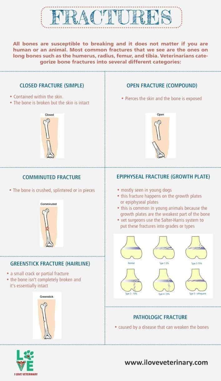 Bone Fractures I Love Veterinary