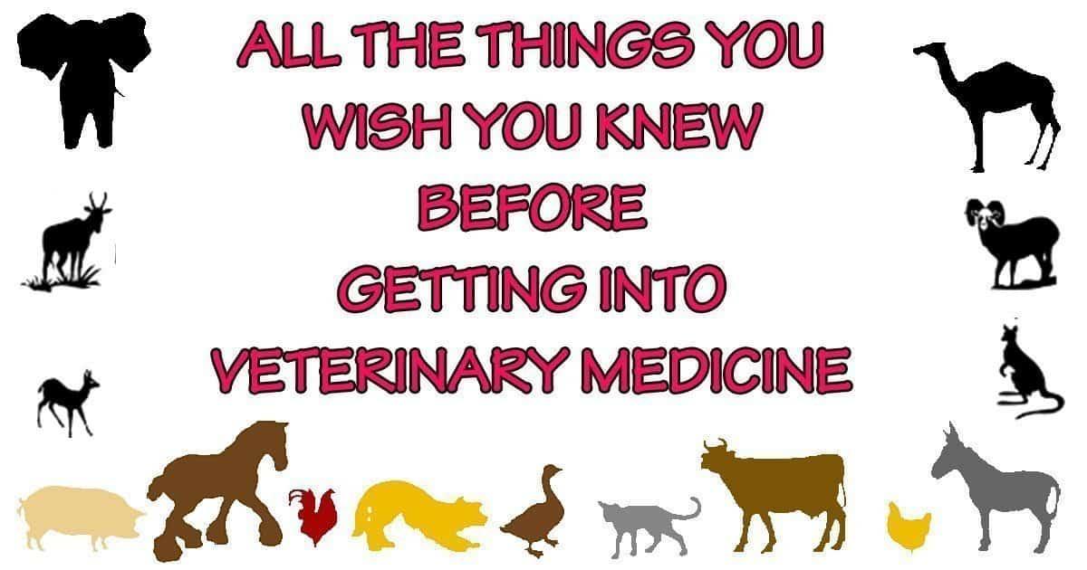 veterinary medicine animals