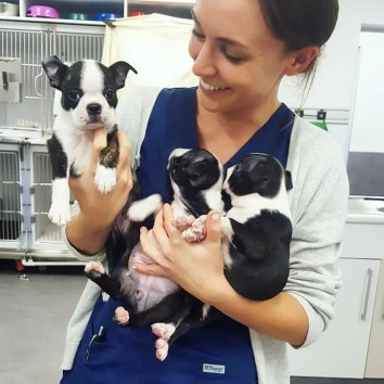 Dr Kate with puppies