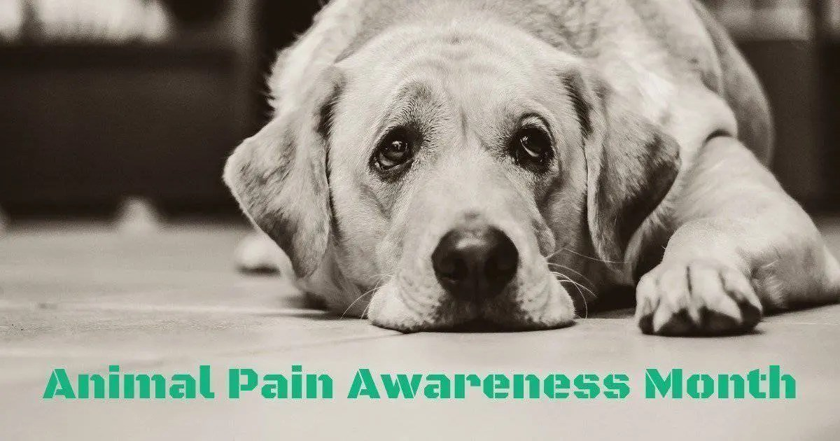 sad dog in a black and white photography, Animal Pain Awareness Month