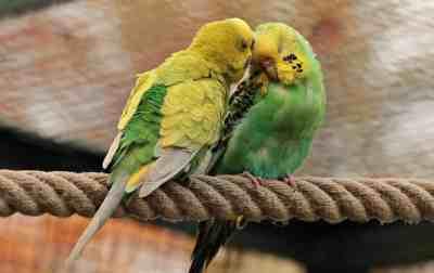 adopt a rescue bird month