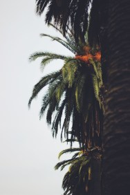 Palm Trees Please