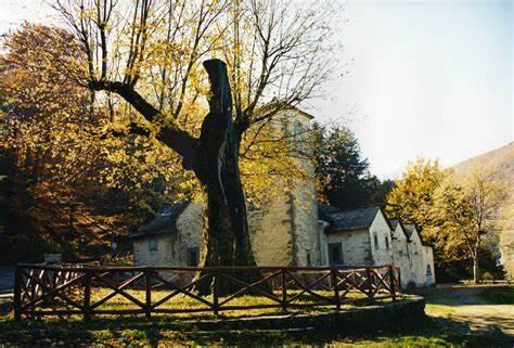 alberi-monumentali-e-r