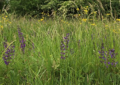Wildflowers in the field outside the gate
