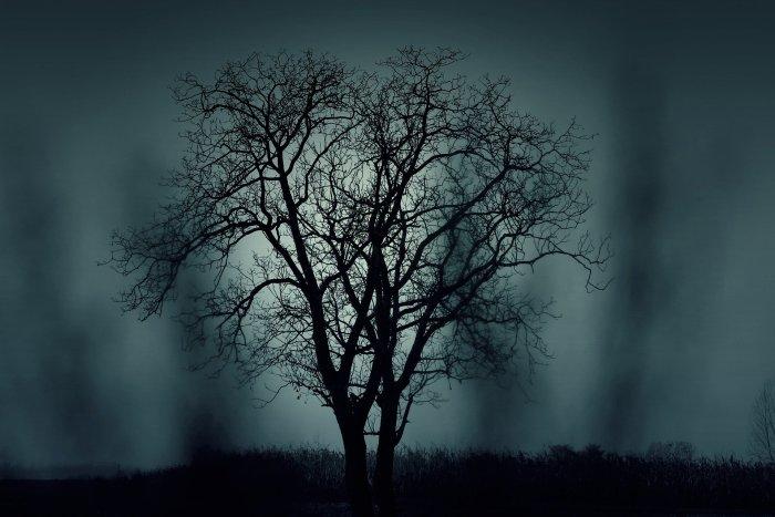 Samhain albero poesia il Principe