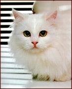 cat1a
