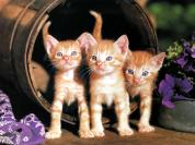 Ouriel_-_Chat_-_0040-Brown_Domestic_Cats-kittens_in_basket