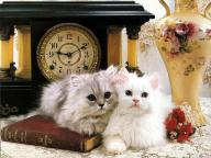 Ouriel_-_Chat_-_0042-White_Domestic_Cats-kittens