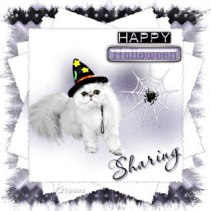 Sharing_Witchy_Web~6paws_jpg