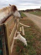 cat_horse_kiss_love2