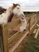 cat_horse_kiss_love4