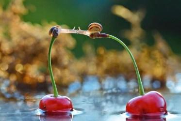 snail_tale_03