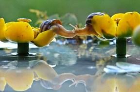 snail_tale_04