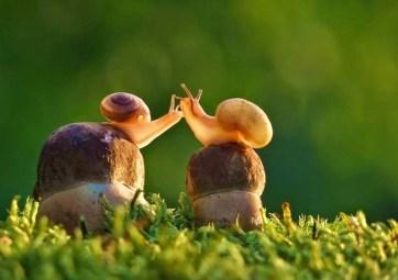 snail_tale_06