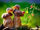 snail_tale_17
